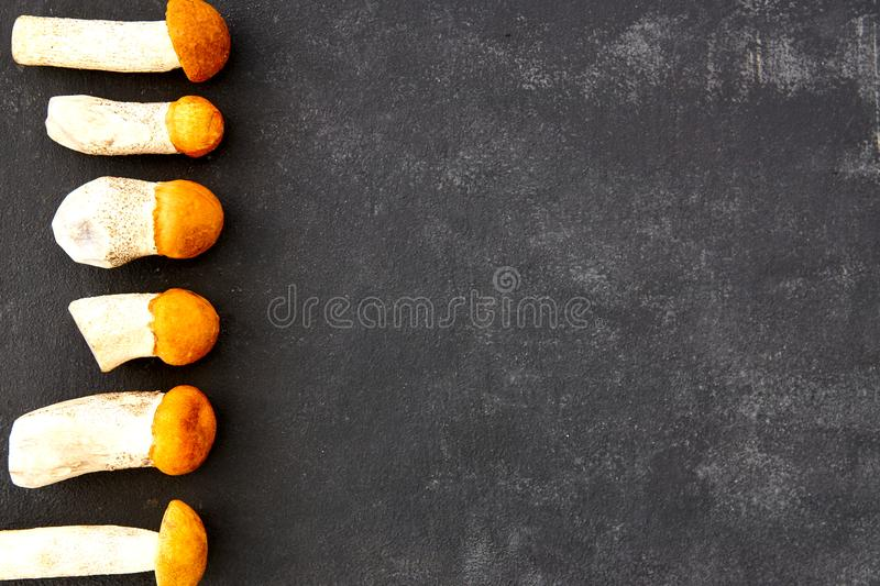 Orange cap boletus Mushrooms in a row on dark background. Nature, environment and edible mushrooms concept with copy space. Top stock photography