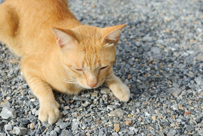Download Orange Cat stock photo. Image of rest, relax, mammal - 16123232