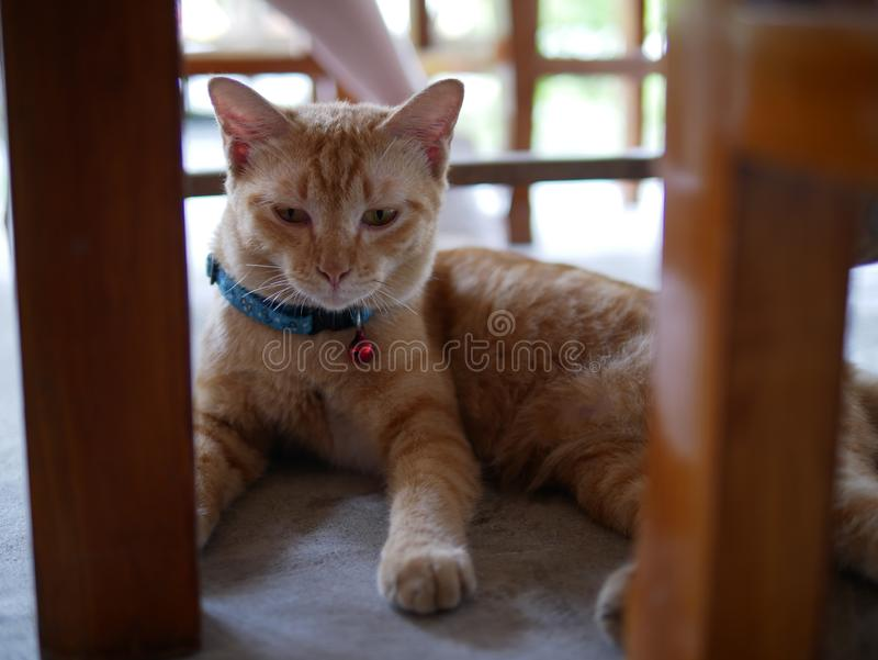 Orange cat concentrate to the floor royalty free stock images