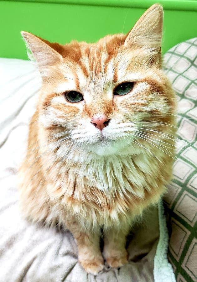 Orange cat head tilted. Kitten stock photos