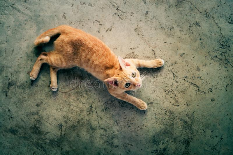 Orange cat is lying on the concrete floor and looking at the top. Top view photo. With blank copy space. Selective focus. Orange cat is lying on the concrete royalty free stock images