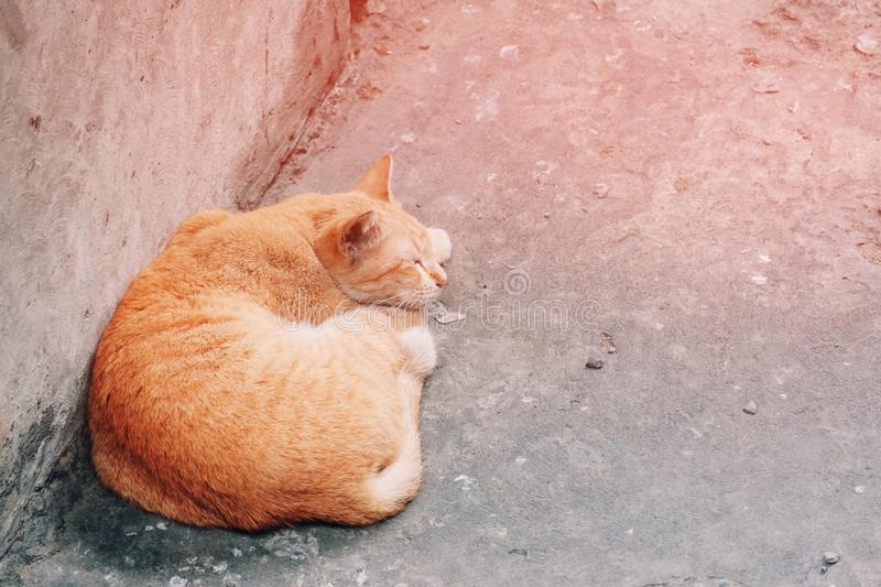 Orange cat sleeping on the floor at home. Pet, cute, relax, animal, kitty, rest, red, adorable, feline, fluffy, close, soft, closeup, ginger, resting stock photo