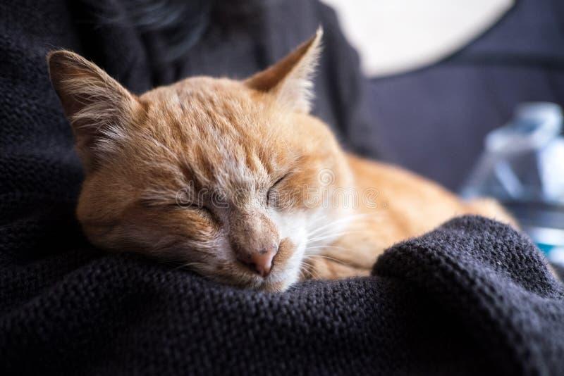 Download Orange Cat Sleeping In Girl Hug Stock Image - Image of cats, holding: 57534695