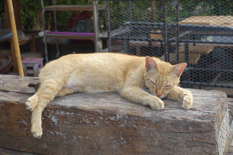 Download Orange Cat Is Sleeping On The Open Air Stock Photo - Image of animal, orange: 76537534