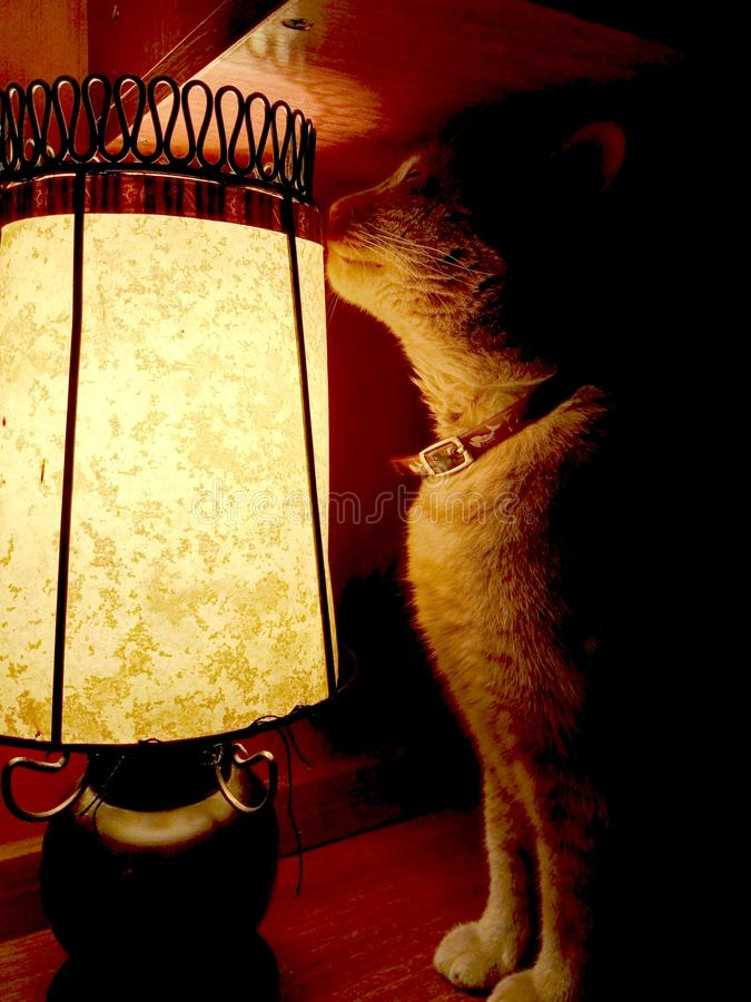 Yellow cat sitting next to lamp royalty free stock photo