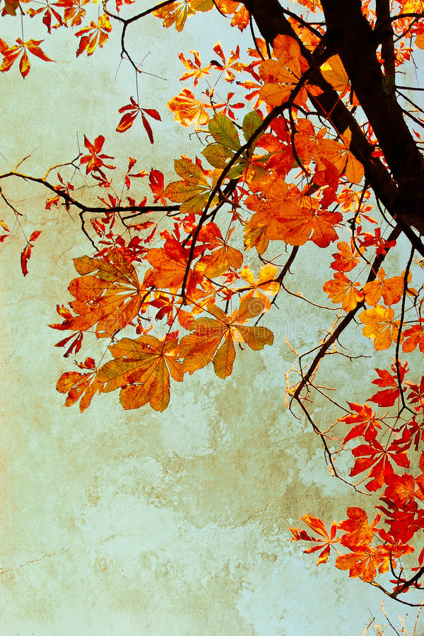 Orange chestnut leaves grungy background stock image