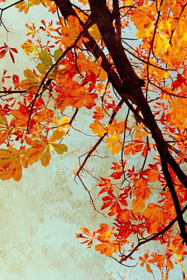 Orange chestnut leaves grungy background stock photography
