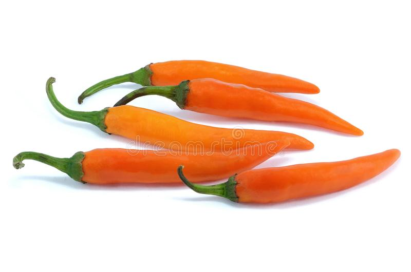 Orange chili pepper royalty free stock photo