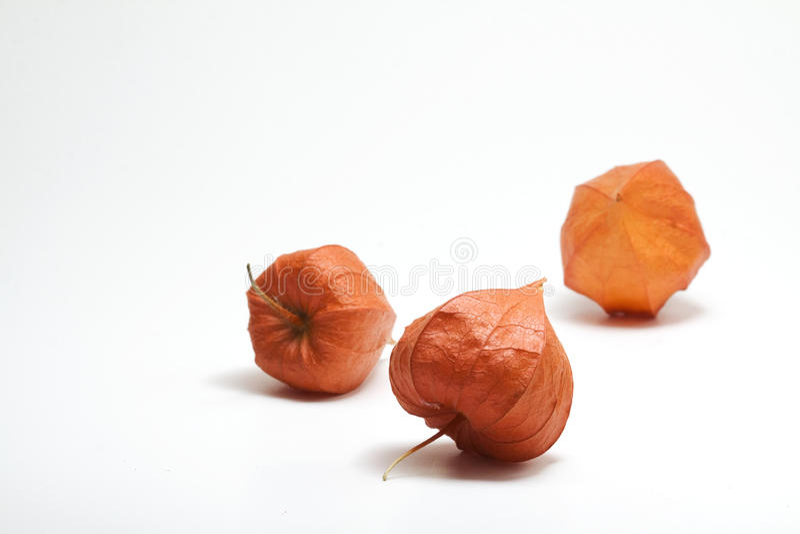 Orange chinesische Laternen-Anlage lizenzfreie stockfotos