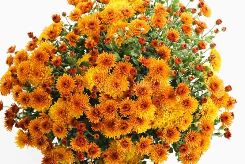 Orange Chrysanthemen lizenzfreie stockfotografie