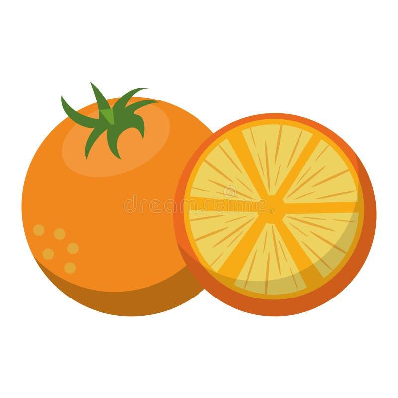 Orange citric fruits royalty free illustration