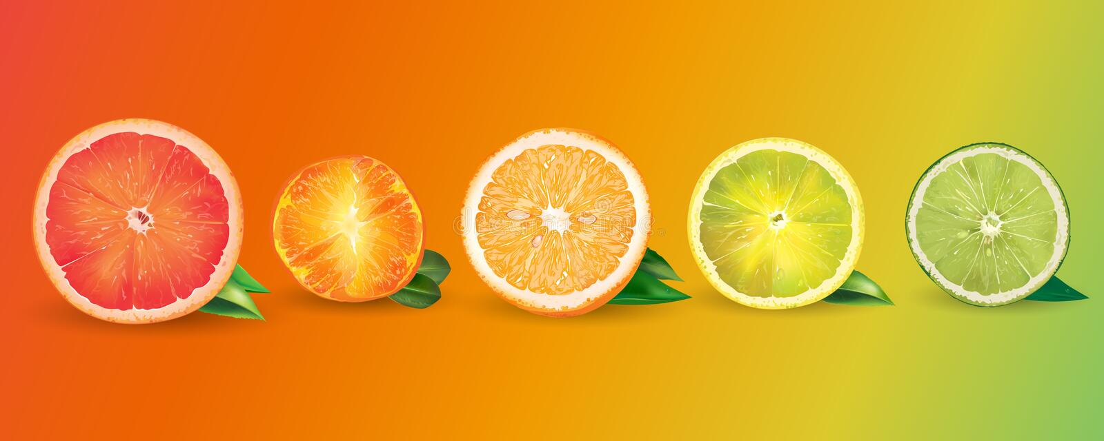 Orange, citron, agrume, mandarine, pamplemousse et chaux illustration de vecteur