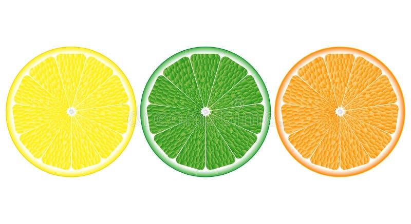 Orange, citron, haut étroit de chaux illustration de vecteur