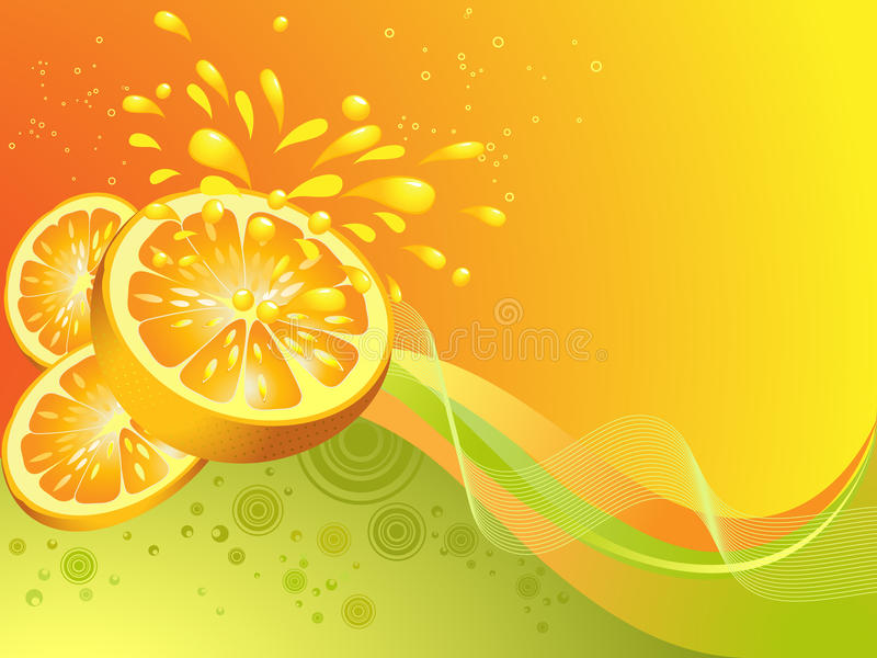 Orange citrus fruit. Vector illustration royalty free illustration