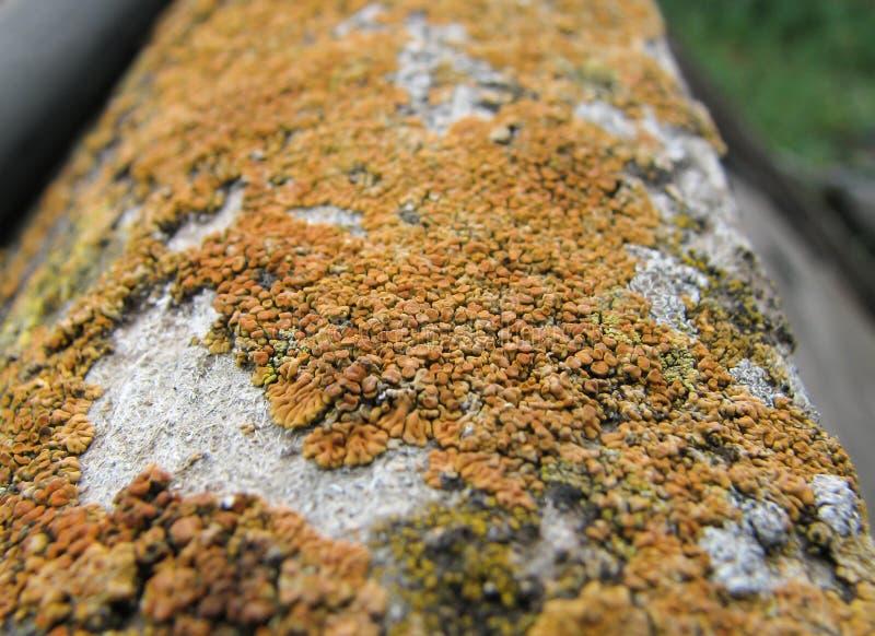 Orange colony of fungus close-up stock photography