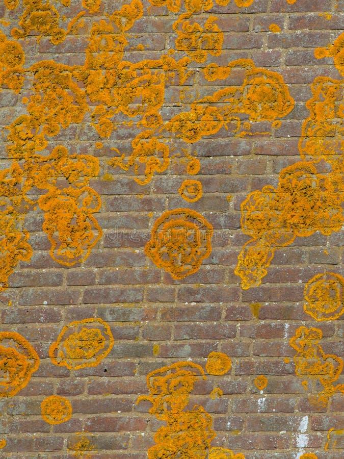 Orange Crustose lav fotografering för bildbyråer