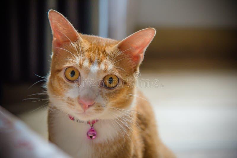 The orange cute cat stock photography