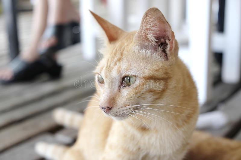 Orange cute cat - soft focus. Photo of Orange cute cat - soft focus royalty free stock photo