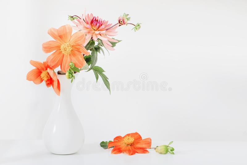 Orange dahlia in white vase on white background royalty free stock images