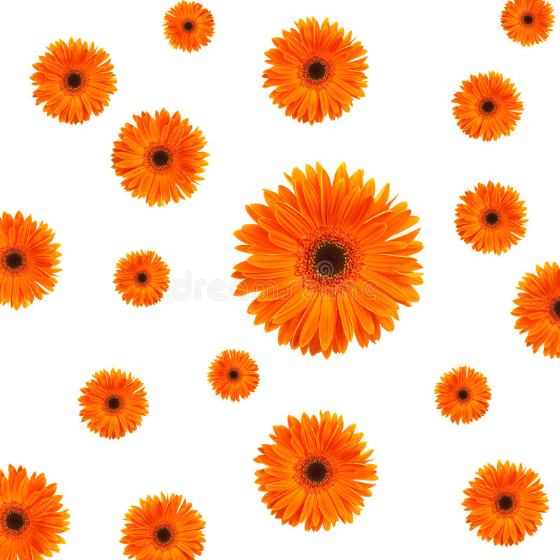Free Orange Daisy Background Royalty Free Stock Image - 1577886