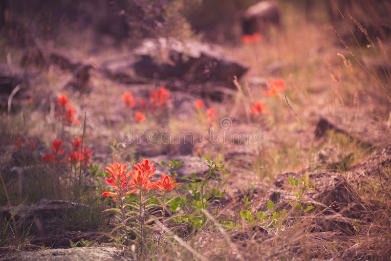 Orange de coucher du soleil photographie stock