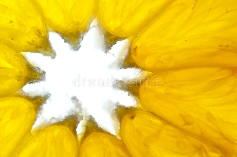 Download Orange detail stock image. Image of macro, energy, yellow - 23153647