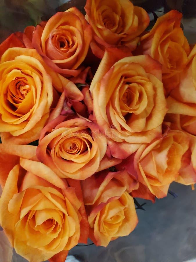 Orange Dozen Roses. Beautiful, colour stock images