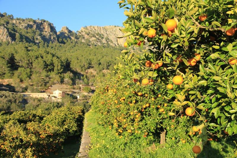 Orange dunge på stenterrass med medelhavs- bakgrund fotografering för bildbyråer