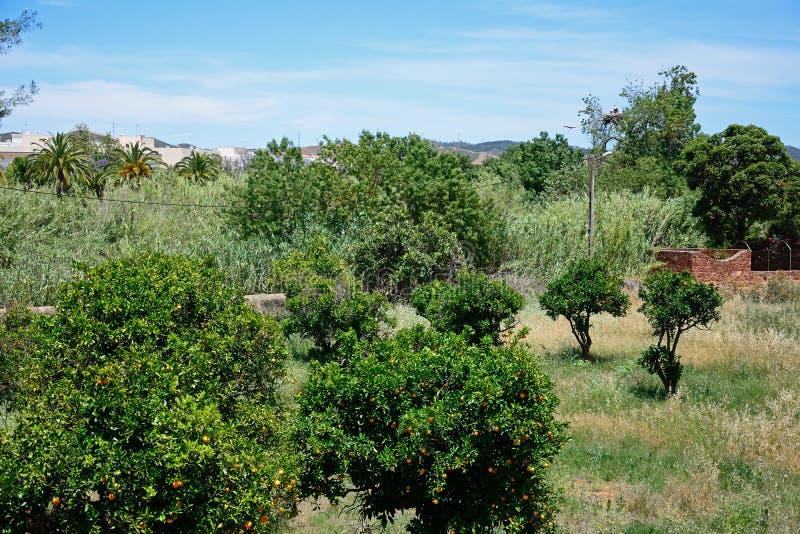 Orange dunge, Silves, Portugal royaltyfri bild