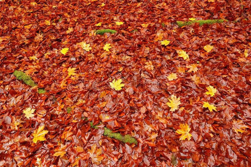 Orange Eiche und gelbe Ahornblätter aus den Grund mit grünen Mooswurzeln Herbstbild vom tschechischen Waldherbstlaub unten von t lizenzfreie stockfotos