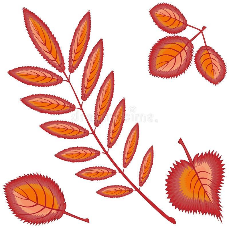 Orange eller röda sidor för olik höst fyra - rönnen, lönn, björken, asp - på en vit bakgrund Mönstra sömlöst stock illustrationer