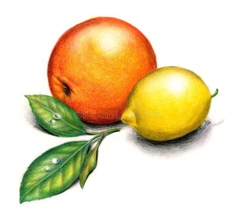 Orange et citron illustration libre de droits