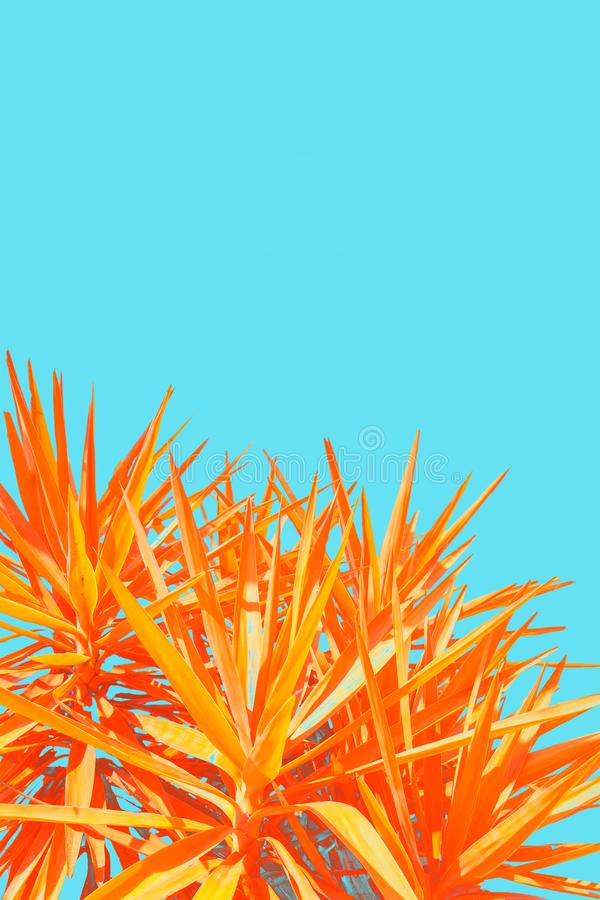 Orange, exotic plant on bright, blue background, minimalistic royalty free stock photos