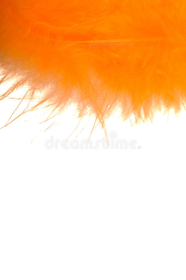 Free Orange Feather Stock Image - 12373331