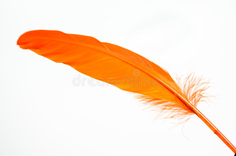 Orange feather close up. Orange duck feather close up isolated over white stock photo