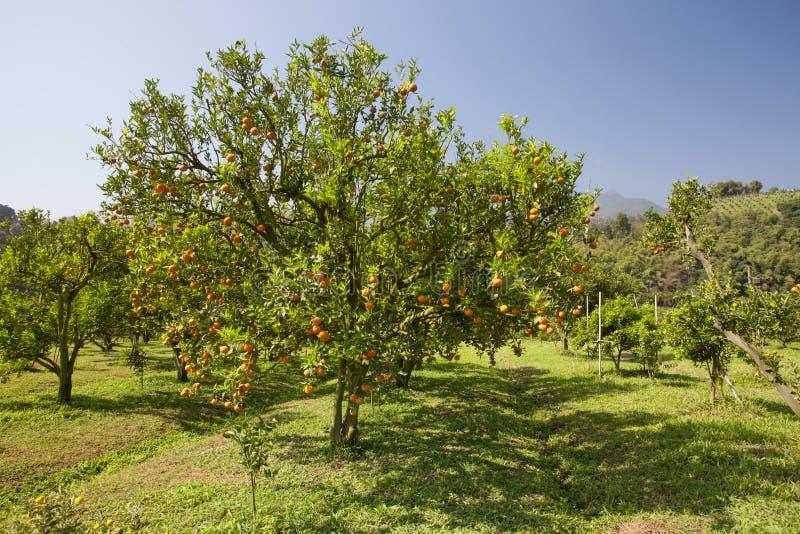 Orange Feld lizenzfreies stockfoto