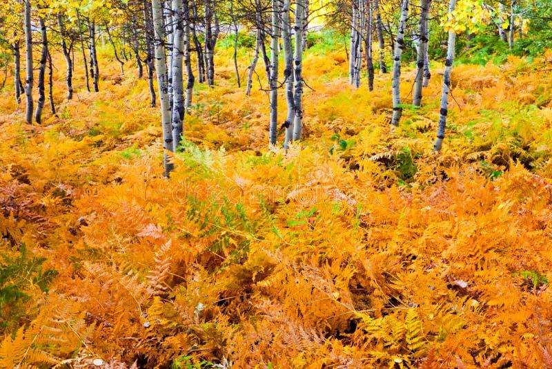 Orange Ferns arkivbild
