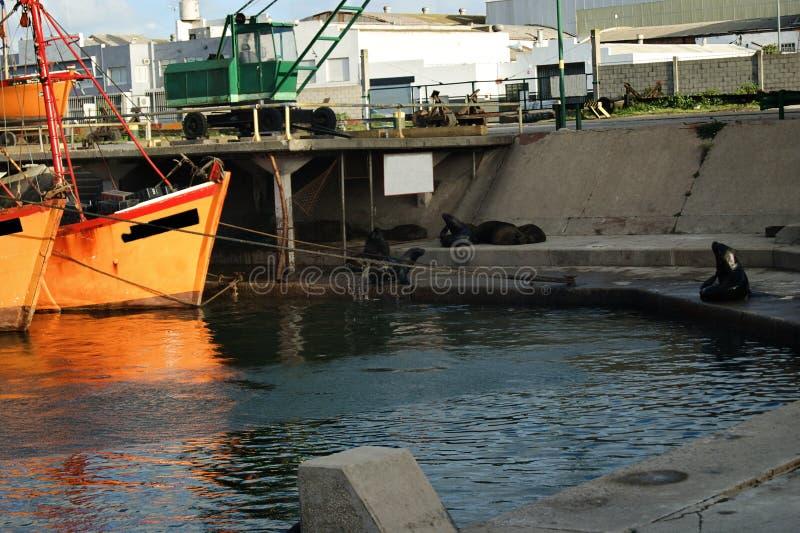 Orange Fischerboote und Seelöwen im März Del Plata lizenzfreies stockbild