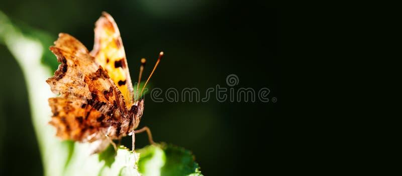 Orange fjäril för makrosikt på det gröna bladet kopieringsutrymme, fält för grunt djup royaltyfri fotografi