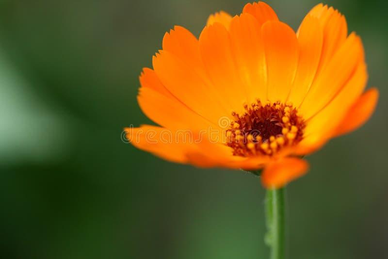 Orange Flamme lizenzfreies stockbild
