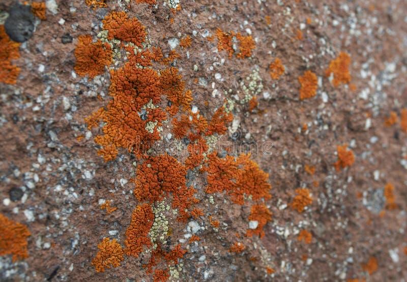 Orange Flechtenhintergrund im Stein stockfotos