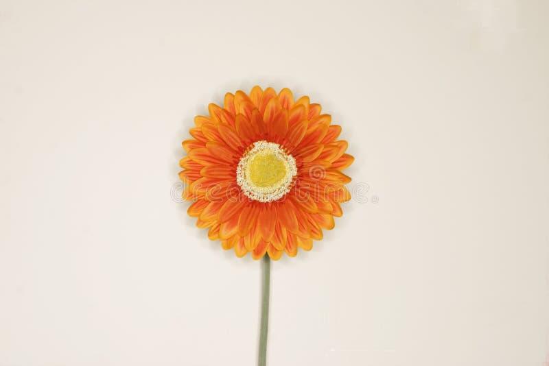Orange flower. Against white background stock photography