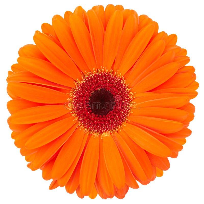 Free Orange Flower Stock Photos - 19524563