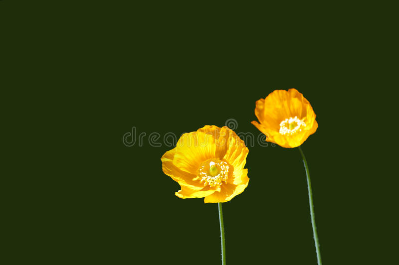Download Orange flower stock image. Image of outdoor, landscape - 26760097
