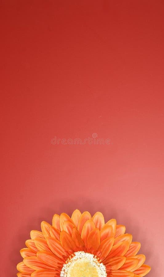 Orange flower 3. Orange flower against reddish background royalty free stock photo