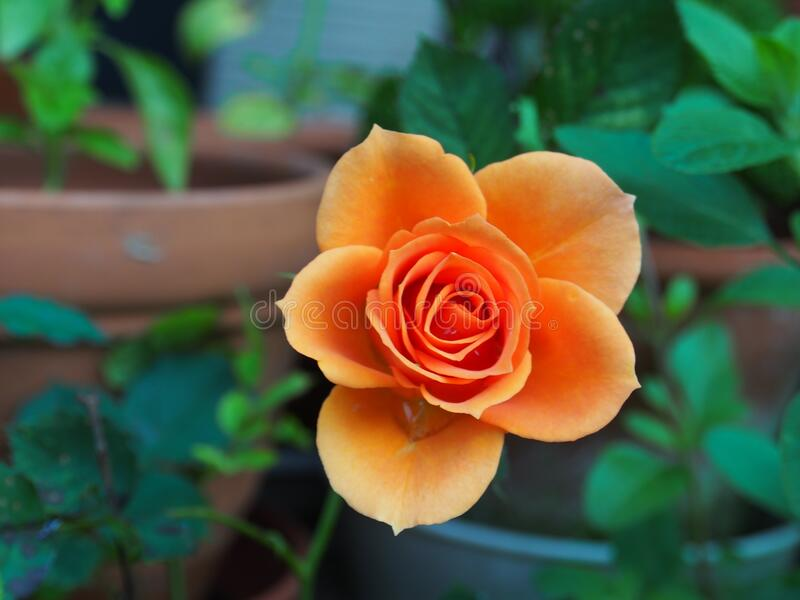 Orange Flower Free Public Domain Cc0 Image