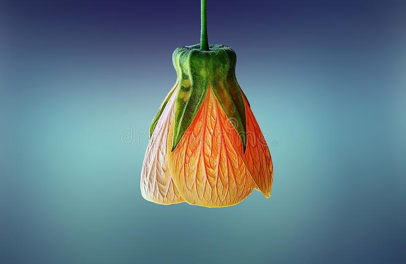 Orange flower bud royalty free stock images