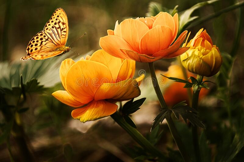 Orange Flower With Butterfly Free Public Domain Cc0 Image