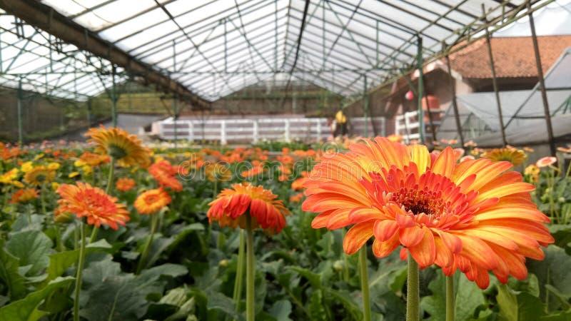 Orange Flower stock photo
