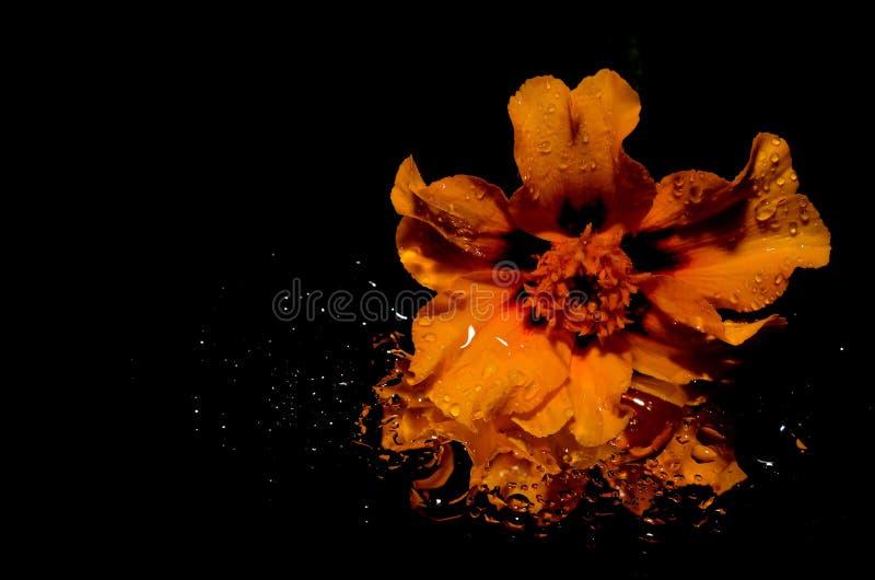 Orange Flower Illustration Free Public Domain Cc0 Image